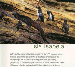 isla isabella galapagos islands celebrity cruises